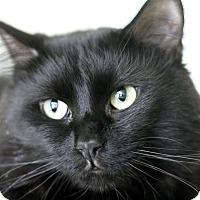 Adopt A Pet :: Flint - Chicago, IL