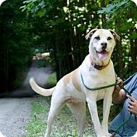 Adopt A Pet :: Reecy - Charlotte, NC