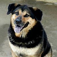 Adopt A Pet :: Ginger - Ozark, AL