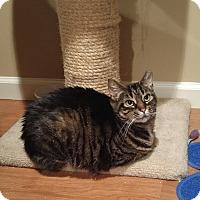 Adopt A Pet :: Tigger - Lenhartsville, PA