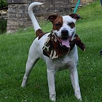 Adopt A Pet :: Austin - Washington, PA