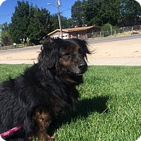 Adopt A Pet :: Lollie - Meridian, ID