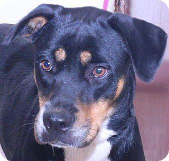 Hound (Unknown Type) Mix Dog for adoption in McDonough, Georgia - Kitzle