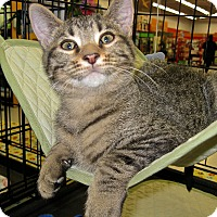 Adopt A Pet :: Elvis - Fort Wayne, IN