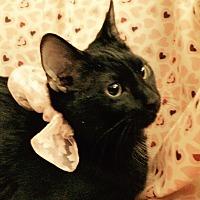Adopt A Pet :: Georgia - Carlisle, PA