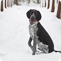 Adopt A Pet :: Gunner - Drumbo, ON