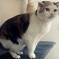 Adopt A Pet :: Frannie - tama, IA