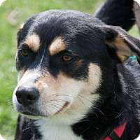 Adopt A Pet :: Athena - Harvard, IL
