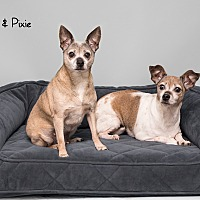 Adopt A Pet :: Pixie and Dolly - Westfield, NY
