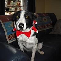 Adopt A Pet :: Sullivan - Toronto, ON