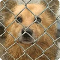 Adopt A Pet :: Oakley-ADOPTION PENDING - Boulder, CO