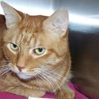 Adopt A Pet :: Mercy - Westville, IN