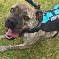 Adopt A Pet :: MAX - Camarillo, CA