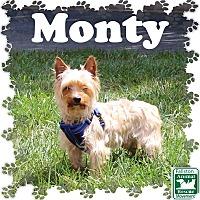 Adopt A Pet :: Monty - Fallston, MD