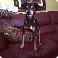 Adopt A Pet :: Mocha Latte - Davie, FL