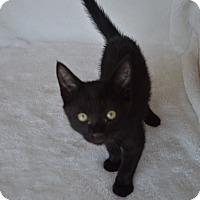 Adopt A Pet :: Mindy - Aurora, CO