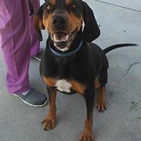Adopt A Pet :: Knox - Knoxville, IA