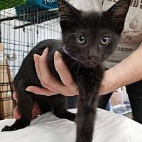 Adopt A Pet :: Drachma - Princeton, MN