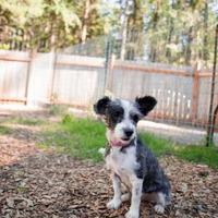 Adopt A Pet :: Abby - Eugene, OR