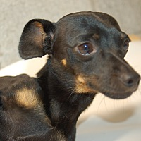 Adopt A Pet :: DALLAS - Lebanon, TN