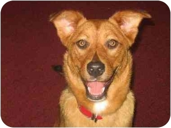 Shepherd (Unknown Type) Mix Dog for adoption in Lancaster, Kentucky - Miss Cindy Lou