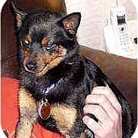 Adopt A Pet :: Eddie Munster - Nashville, TN