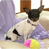 Adopt A Pet :: Maddy - Glastonbury, CT