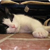 Adopt A Pet :: Jenkins - Centerburg, OH