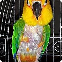 Adopt A Pet :: Lucky - Lenexa, KS