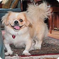 Adopt A Pet :: Patrick - Richmond, VA