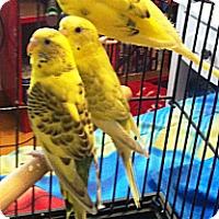 Adopt A Pet :: Tyler - Lenexa, KS