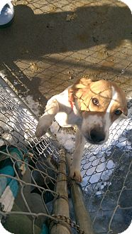 Beagle Mix Dog for adoption in Walden, New York - Dody