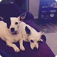 Adopt A Pet :: Ellie and Ava - Marietta, GA