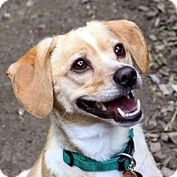 Adopt A Pet :: Marley - Killingworth, CT