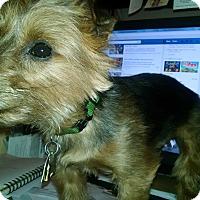 Adopt A Pet :: Arthur - Mount Gretna, PA