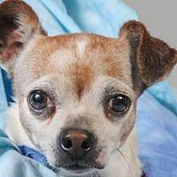 Adopt A Pet :: Dudley - Colorado Springs, CO