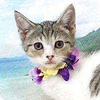 Adopt A Pet :: Pokey - Harrisonburg, VA