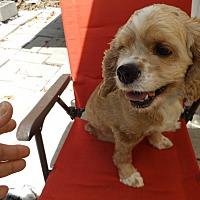 Adopt A Pet :: Paisley - Adopted! - Kannapolis, NC
