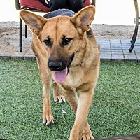 Adopt A Pet :: Ayra - Phoenix, AZ