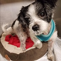 Adopt A Pet :: Baby - Bronx, NY