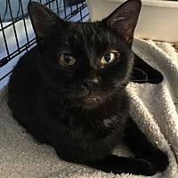 Adopt A Pet :: Wigs - Harrisburg, PA