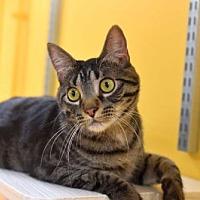 Adopt A Pet :: Rock - St. Paul, MN