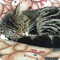 Adopt A Pet :: Porky - Orillia, ON