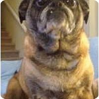 Adopt A Pet :: Emily - Strasburg, CO