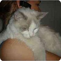 Adopt A Pet :: Dolce - Scottsdale, AZ