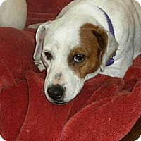 Adopt A Pet :: Lucille - Hastings, NY