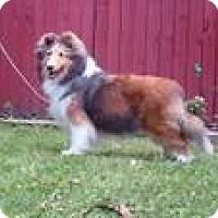 Adopt A Pet :: Sneakers - Alderson, WV