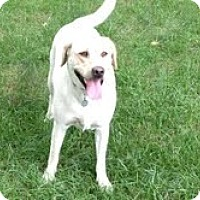 Adopt A Pet :: Buddy - Lewisville, IN