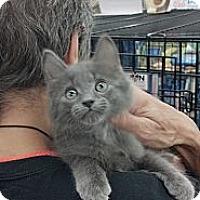 Adopt A Pet :: Journey - Sterling Hgts, MI