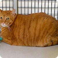 Adopt A Pet :: Milo - Victor, NY